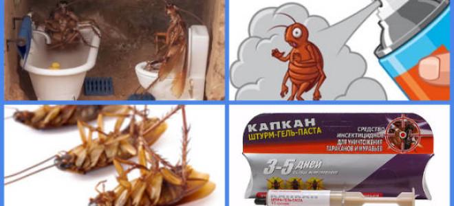 Как бороться с тараканами в общежитии?