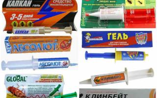 Шприц от тараканов с гелем — применение