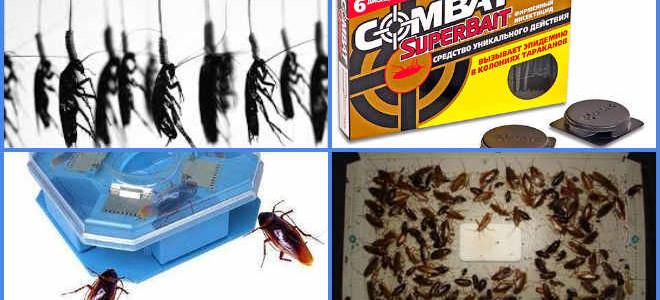 Ловушка для тараканов — обзор самых эффективных
