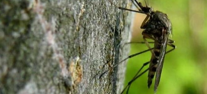 Когда появляются комары? В каком месяце?