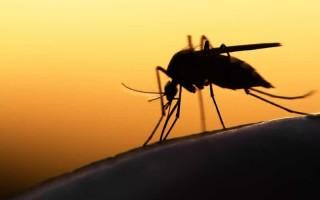 Что означает образ комара во сне – толкования