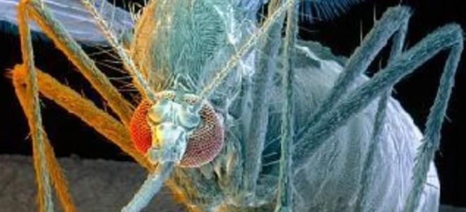 Как выглядит комар и его укус под микроскопом?