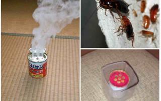 Что за устройство аквафумигатор от тараканов