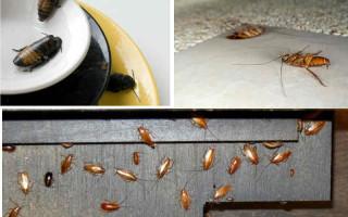 Что делать, если увидели таракана на кухне