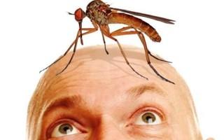 Почему комары кусают некоторых людей больше других