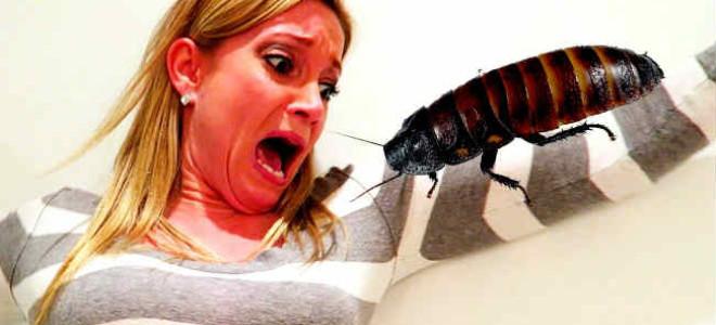 К чему в доме появляются тараканы: приметы и чего стоит ожидать