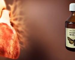 Экстракт восковой моли: лечебные свойства, как применять?