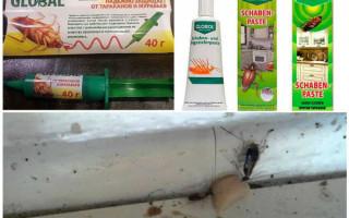 Средство «Глобал» от тараканов: инструкция и виды