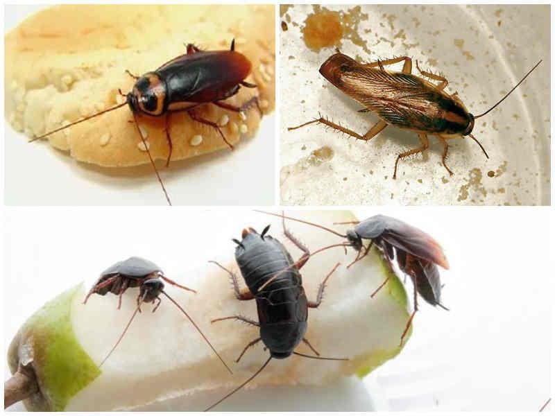 Признаки появления тараканов