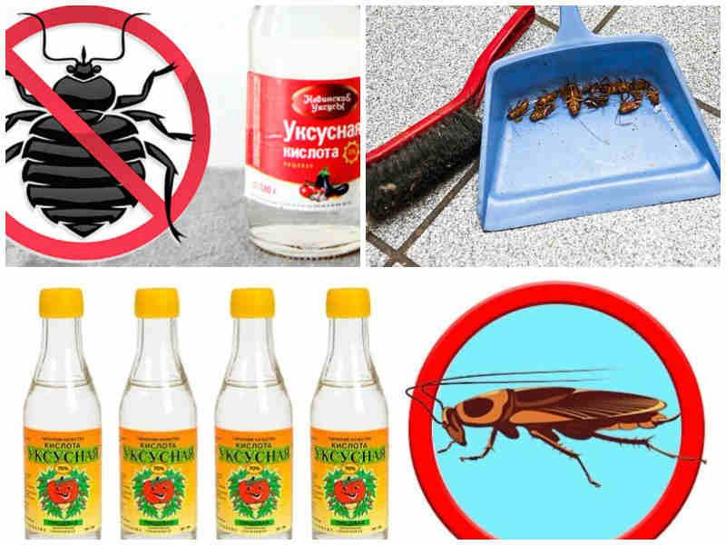 уксус против тараканов