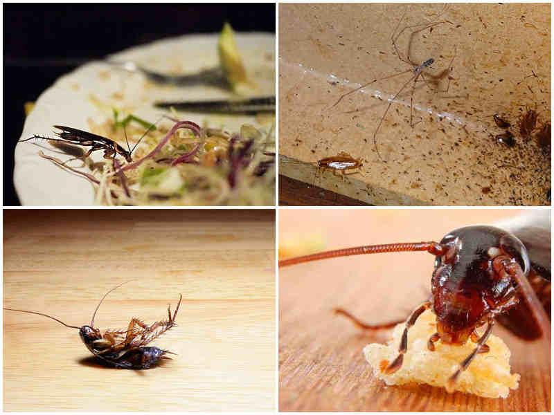 Чем опасны тараканы для человека