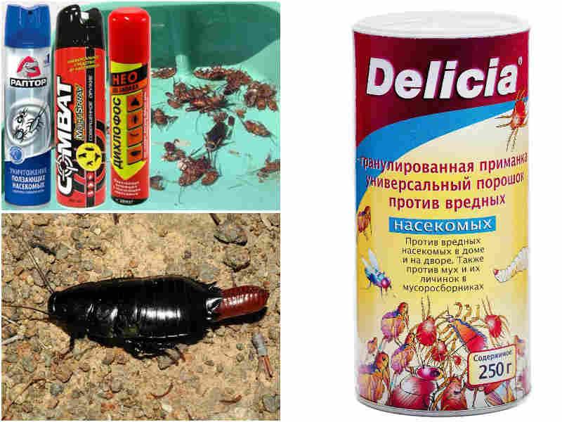 Черный таракан в квартире избавляемся от них
