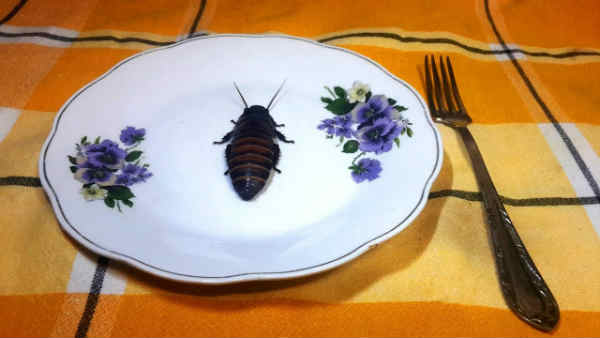 Для чего нужны тараканы в природе