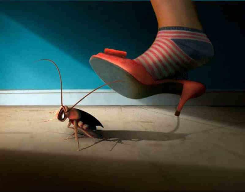 К чему появляются тараканы в квартире