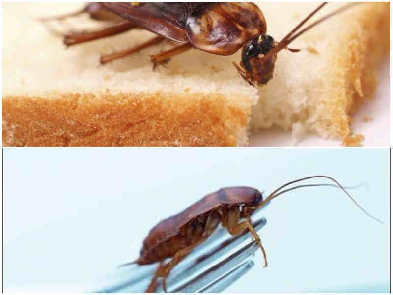 Куда делись тараканы и почему не переваривают нашу пищу