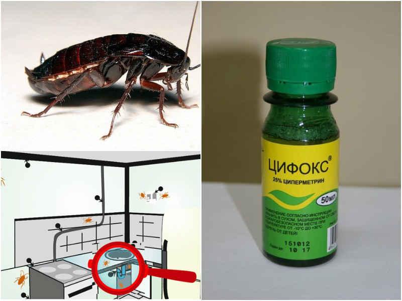 Применение и отзывы средства Цифокс от тараканов