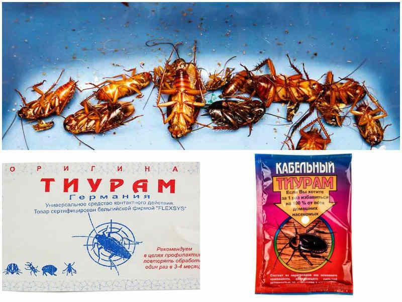 Тиурам от тараканов плюсы и минусы