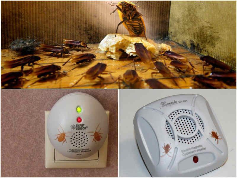 Ультразвуковой отпугиватель тараканов виды
