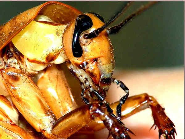Польза тараканов для человека