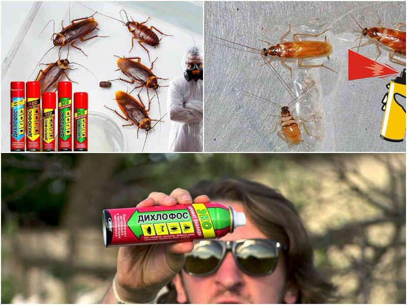 дихлофос от тараканов применение