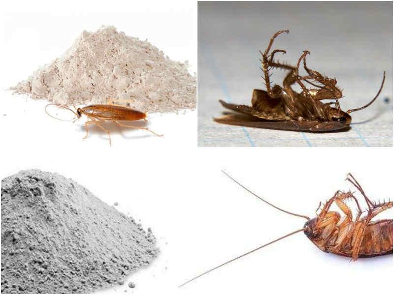 дуст от тараканов плюсы и минусы