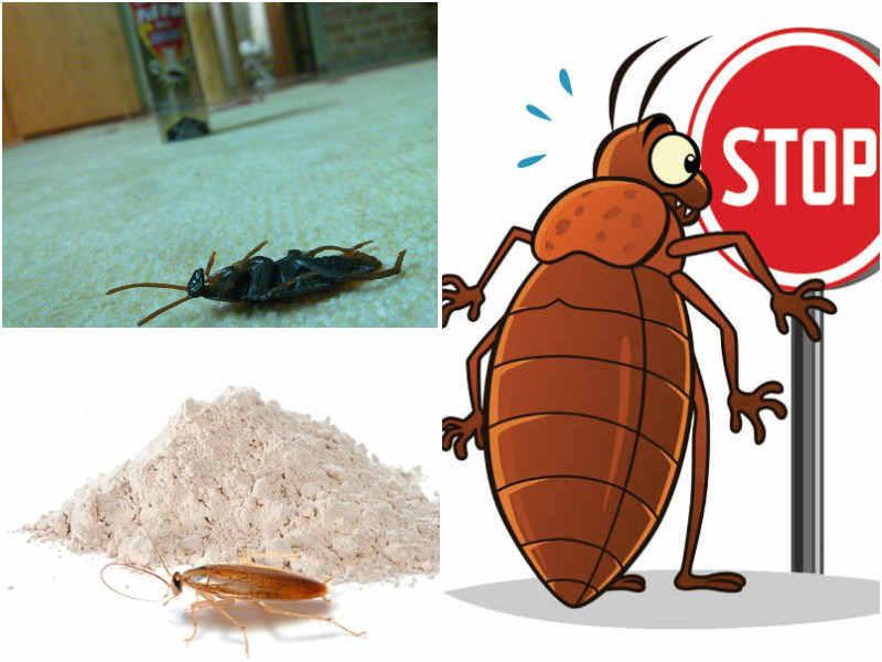 Средства от тараканов Дуст: виды, как действует, отзывы