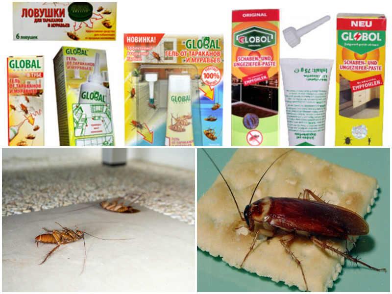 глобал от тараканов виды
