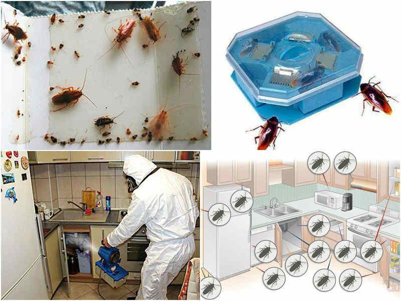 как избавиться от тараканов в общежитии профилактика
