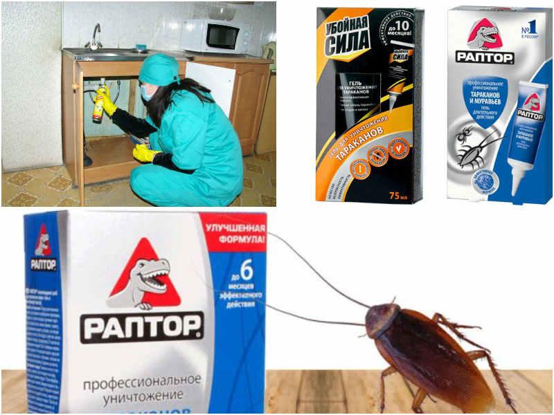 как избавиться от тараканов в общежитии варианты