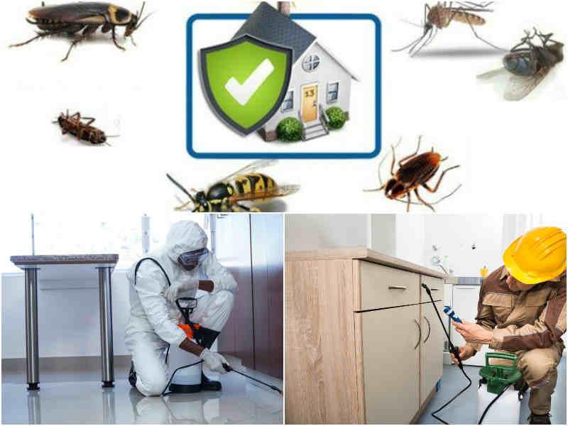 обработка Дезинсекция от тараканов