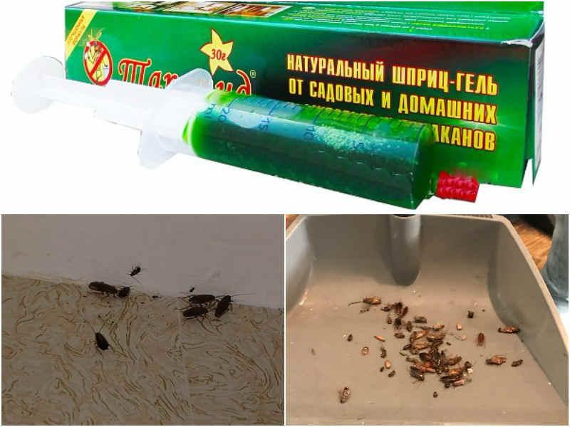 шприц от тараканов применение