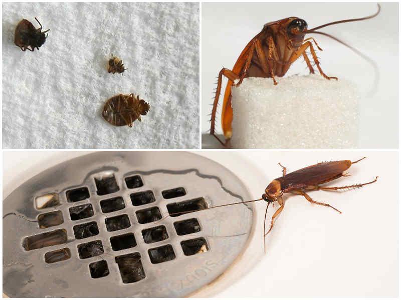 сколько живут тараканы дома без воды