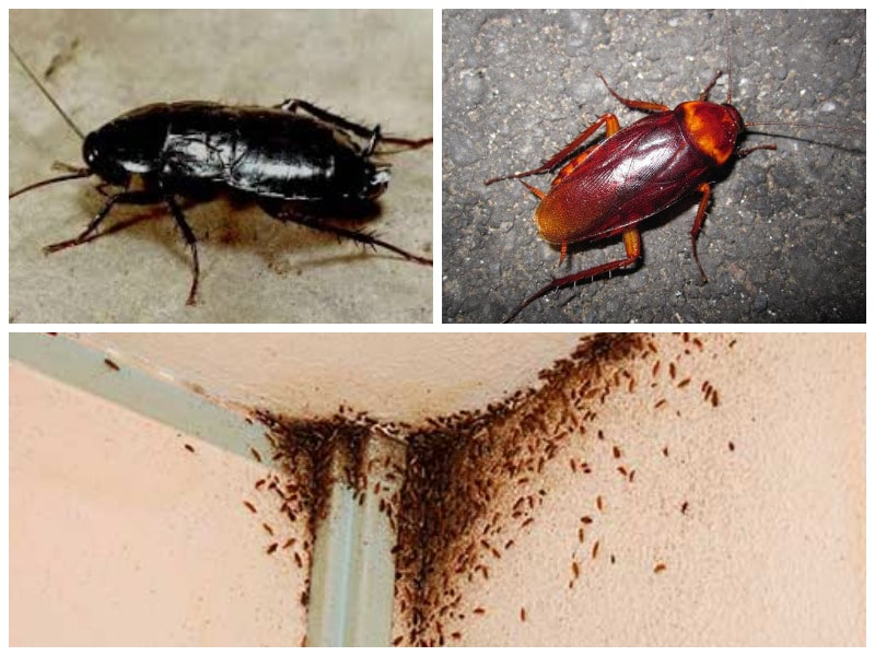 Как избавиться от тараканов: самые эффективные методы борьбы