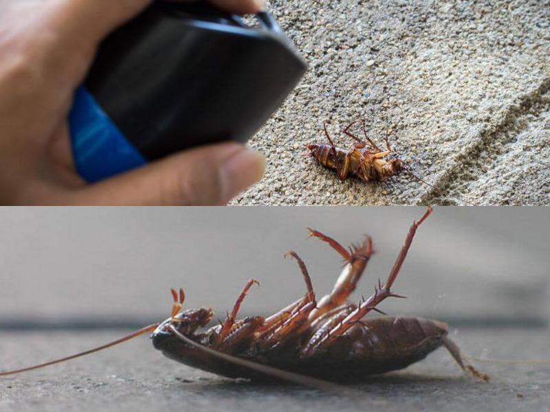 барс от тараканов меры предосторожности