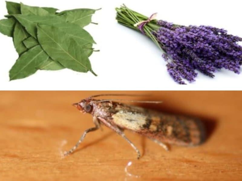 чего боится моль и личинки