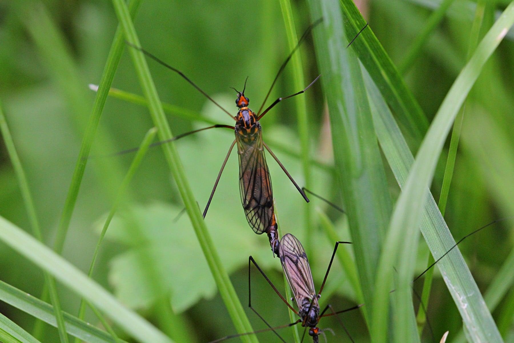 чем питаются комары на болоте
