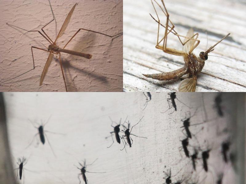 к чему снятся разные комары