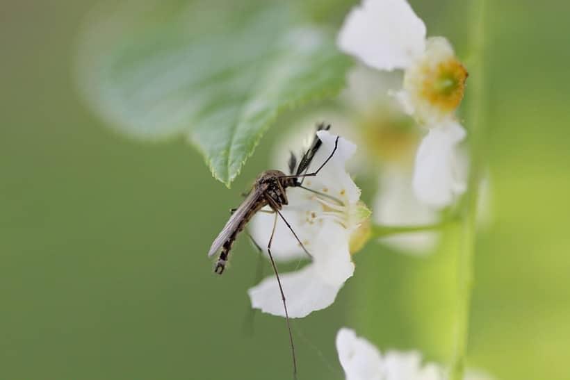 когда появляются первые комары
