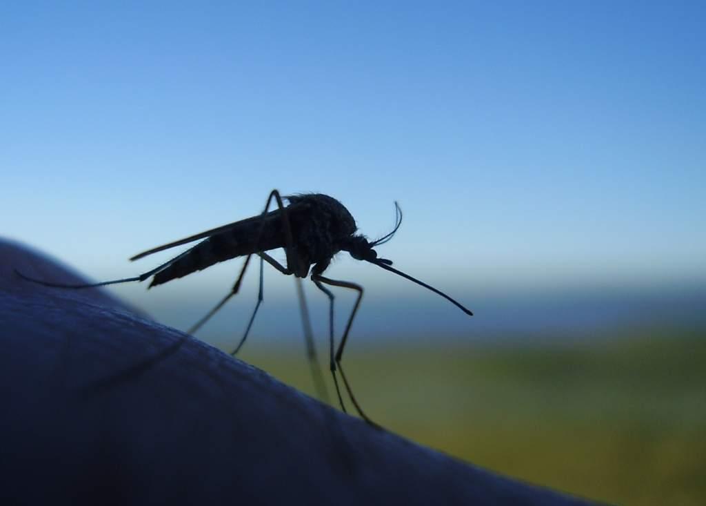 куда деваются комары