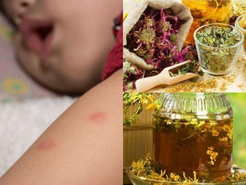 ледум от комаров и народные средства