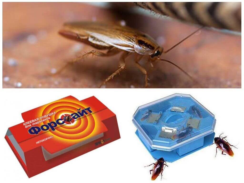 Ловушки тараканов