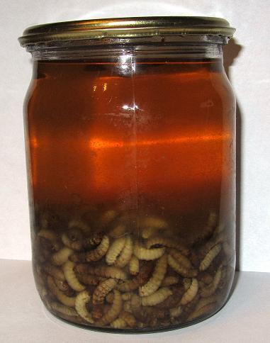 настойка из пчелиной моли