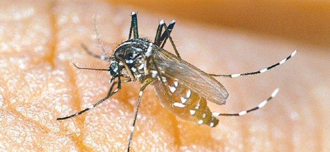 от комаров Чикунгунья