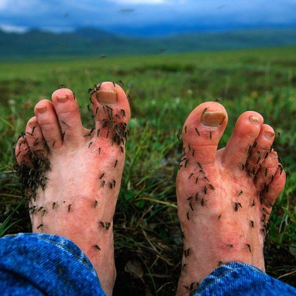 почему комары кусают и кого предпочитают