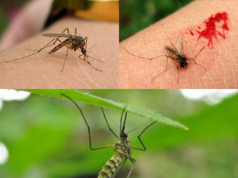 почему кусают комары детей и взрослых