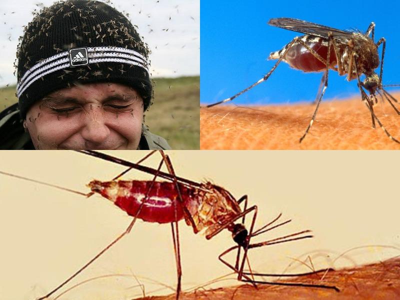 почему кусают комары и как выбирают жертву