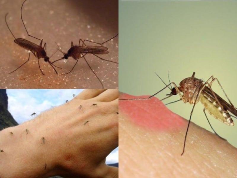 зачем нужны комары и куда чаще всего они кусают