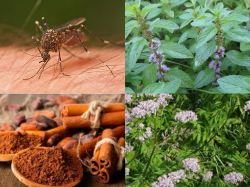 как бороться с комарами