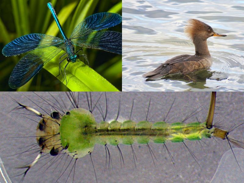 природные враги личинок