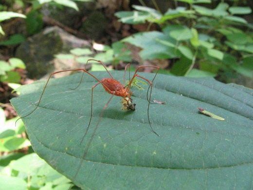 враги комаров